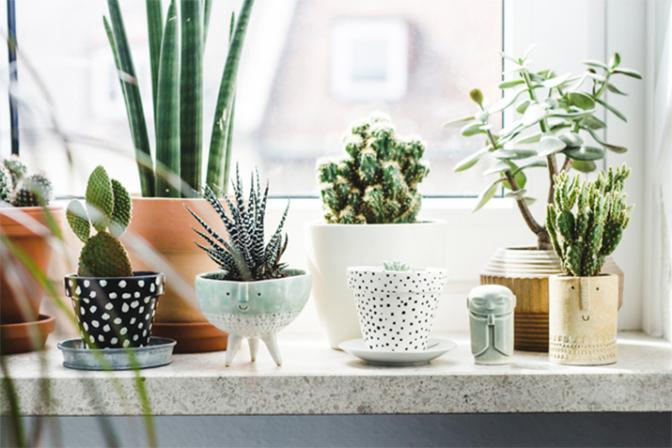 <p>Incorporate some green to liven your home up</p>