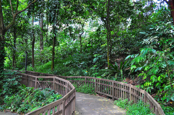 Walking around Bukit Timah Nature Reserve is one of the best things to do in HIllview, Singapore