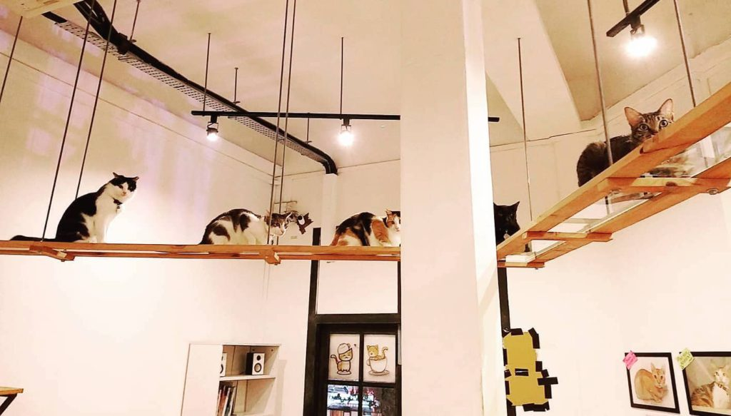 The Cat Cafe houses rescued cats in Hillview, Singaproe