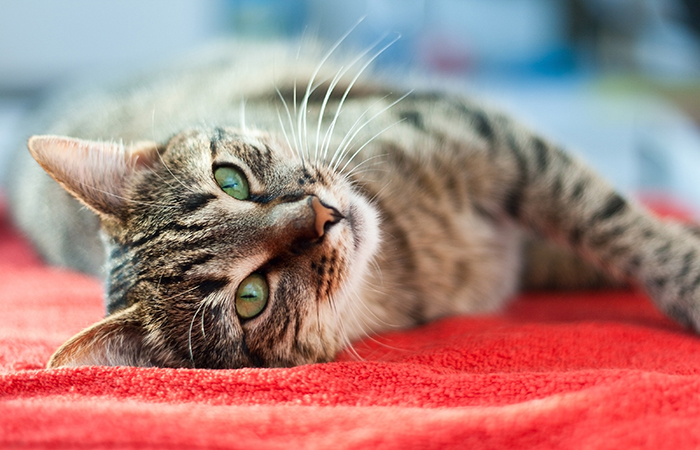 Volunteer with animals at Cat Welfare Society in Singapore