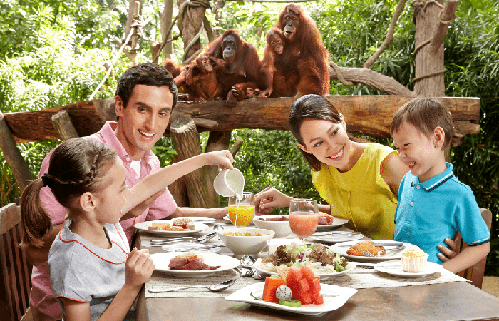 family eating breakfast with orangutans at singapore Zoo's Ah Meng's Terrace restaurant