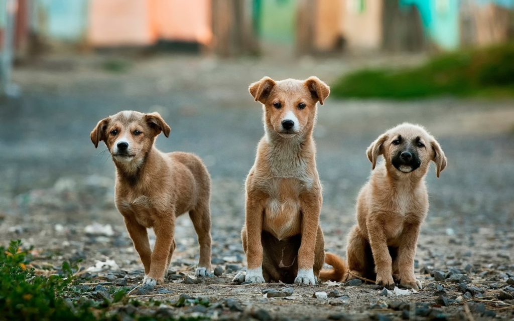Action for Singapore Dogs is a Singapore rescue charity that advocates against animal cruelty.