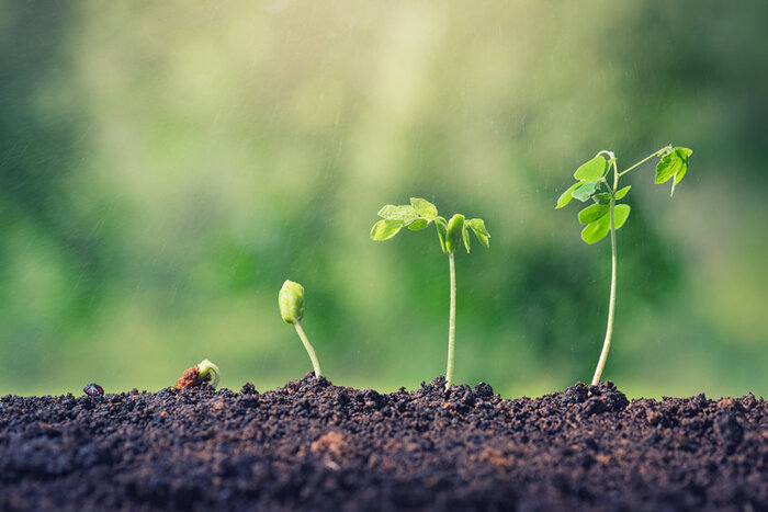 3 small seeds growing out of the soal, to show how self improvement grows in  small increments