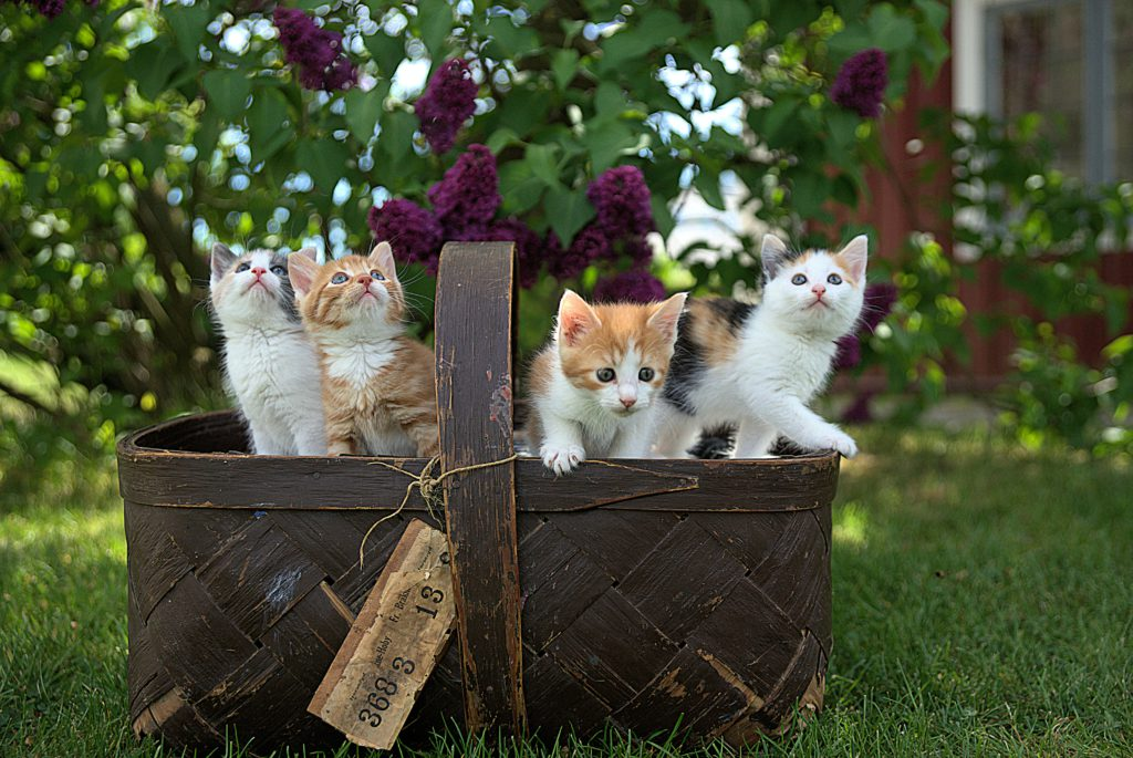 Cats Welfare Society is a Singapore rescue charity that advocates against animal cruelty.