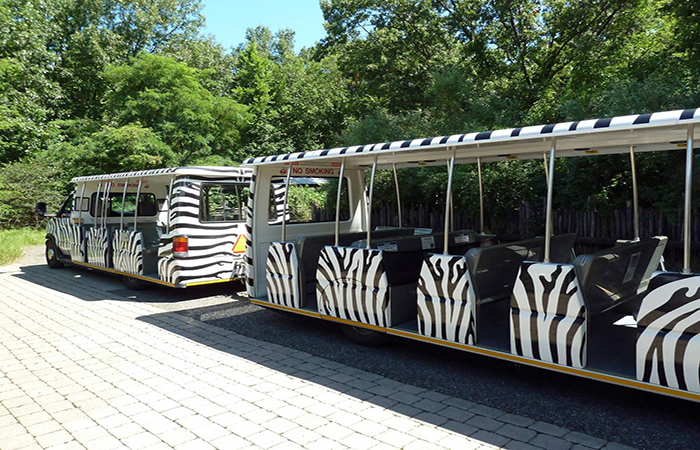 zebra-patterned tram to transport  visitors at Singpore Zoo