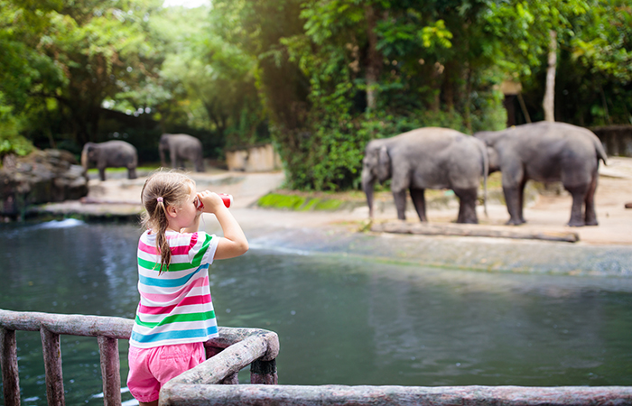 little blond girl watching the elephants at Singaproe Zoo